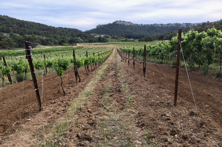 Journey to the heart of the vineyard